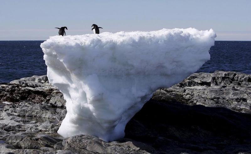 Penguins_east_antarctica-