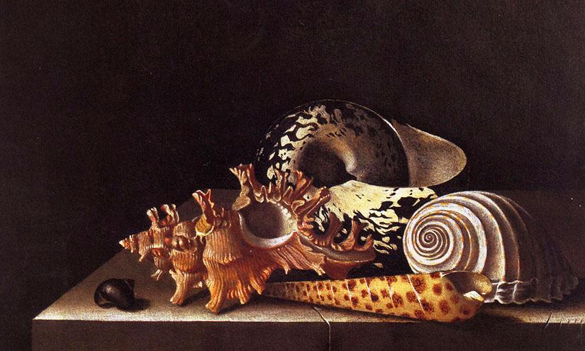 Shells_verso_blog-