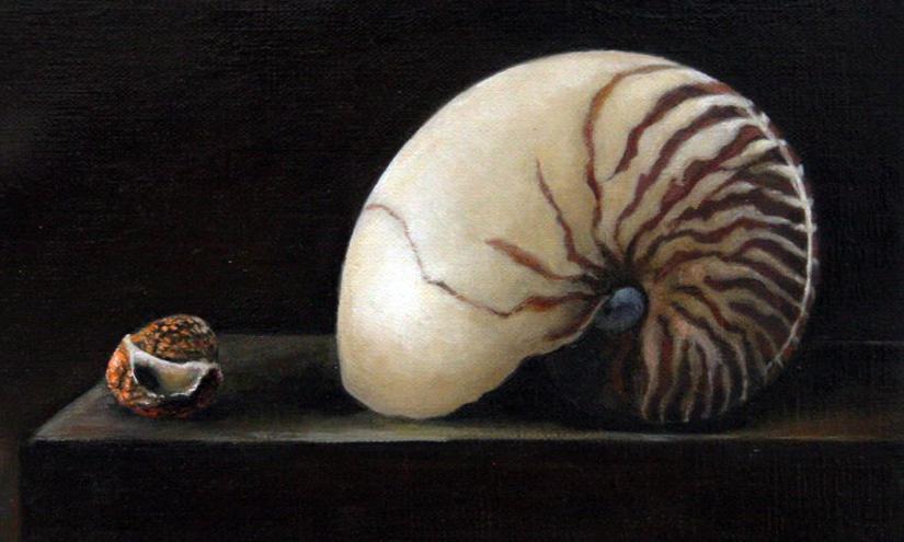 Shells2-
