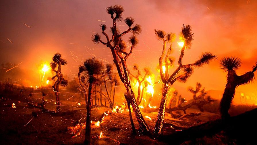 Bobcat-fire-trees-